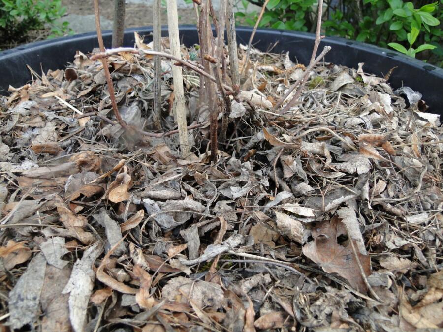 donica wyściółkowana liściami lipy